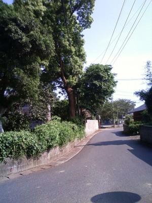 Kanoya3
