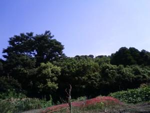 Kanoya4
