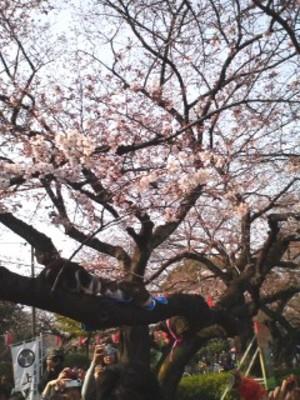 Sakura_neko